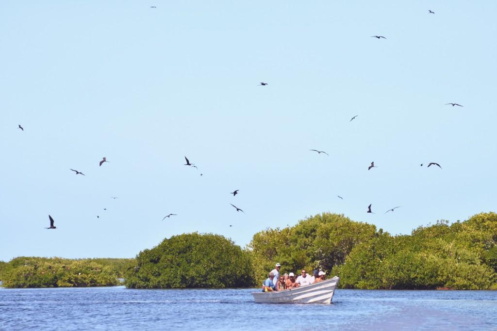 Barbuda, Frigate Bird Sanctuary (3)